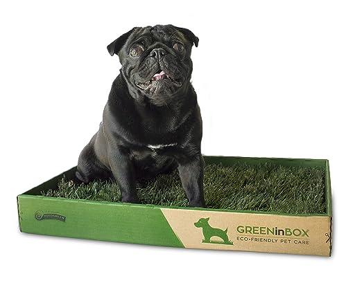 3 opinioni per Lettiera in vera erba GreenInBox-