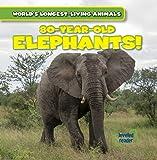 80-Year-Old Elephants! (World's Longest-Living Animals)