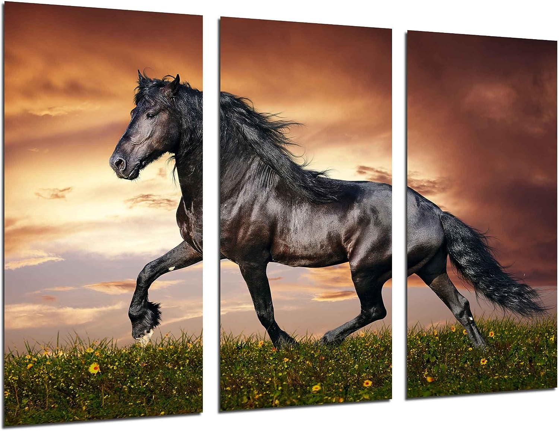 Cuadro Fotográfico Caballo Negro, Paisaje Naturaleza, Animales Tamaño total: 97 x 62 cm XXL