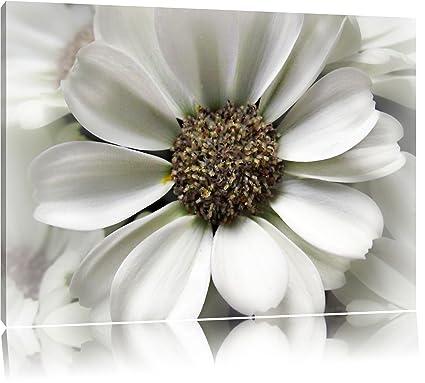poco delicada flor blanca Lienzo, XXL Fotos completamente enmarcado ...