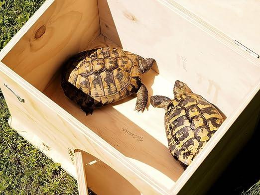 - Blitzen - Caseta de refugio con base para tortugas de tierra. Producto fabricado completamente en Italia: Amazon.es: Jardín