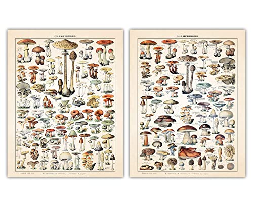 Amazon Com Vintage Mushroom Poster Print Set Of Two 11x14 Photos For Home Office Dorm Bedroom Decor Great Gift Idea Under 20 For Botanical Prints Wall Art Enthusiasts Handmade