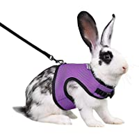 Niteangel Adjustable and Breathable Mesh Harness with Lead for Rabbit (S, Purple)