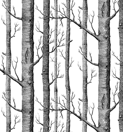 Best Modern Minimalist Birch Tree Pattern Waterproof Wallpaper Wall  GT68