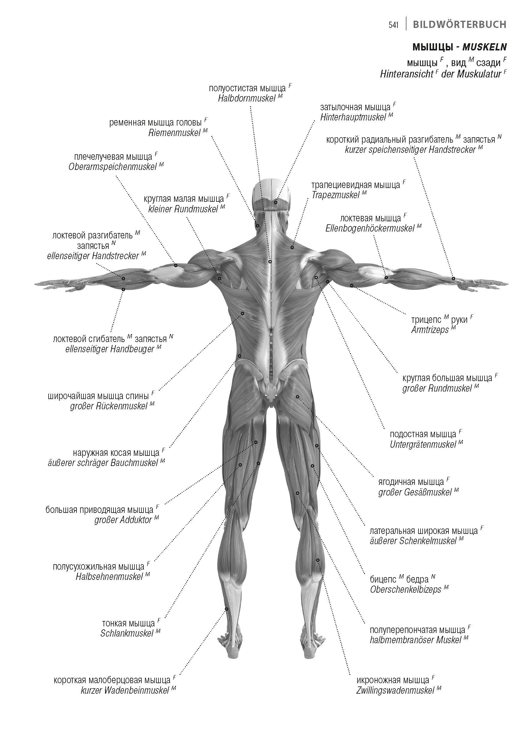 Fein Gerard Tortora Prinzipien Der Anatomie Und Physiologie Fotos ...