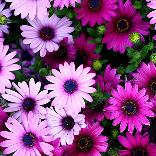 Flowers Live Wallpapers: Amazon.es: Appstore Para Android