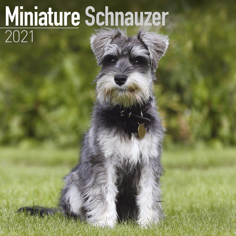 Schnauzer Miniature Calendar   Dog Breed Calendars   2020   2021