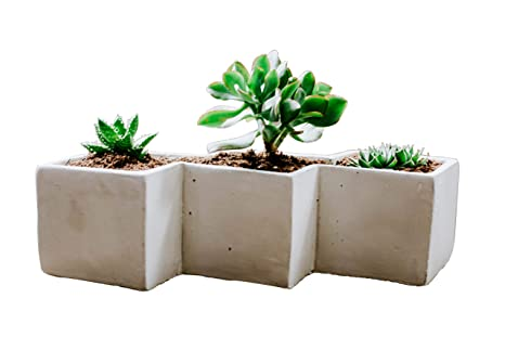 Soul Succulents Zig Zag Pot Diy Terrarium Kit Pea Gravel Sand Soil Mix 11 5 X 4 5 X 2 Inches White