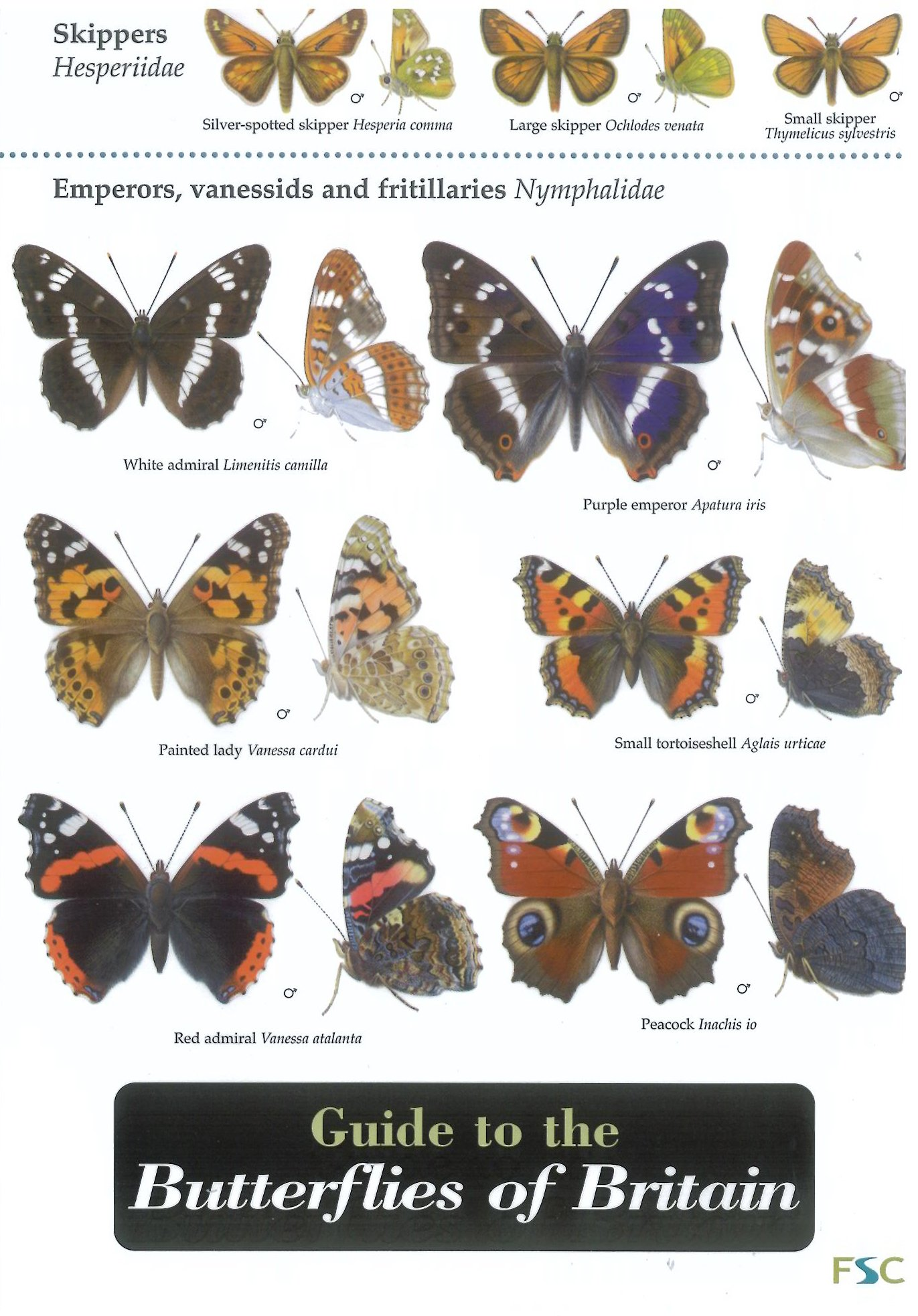 guide to the butterflies of britain field studies council