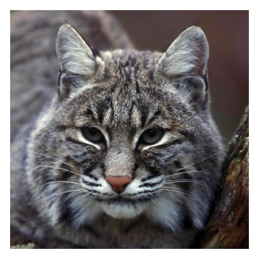 (Lynxes and Bobcats - Live Wallpaper)