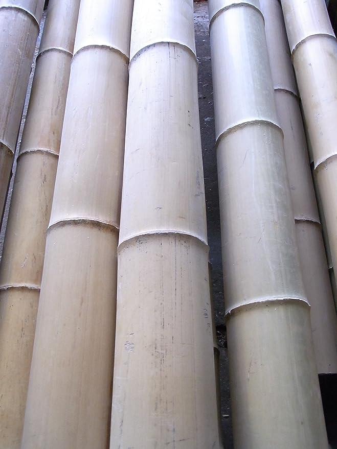 Bambusrohr Bambusstange Bambushalm Bambus Riesenbambus 1 x 8-9 cm x 6 m