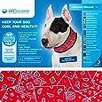 Aqua Coolkeeper Kühlendes Halstuch für Hunde - Red Western