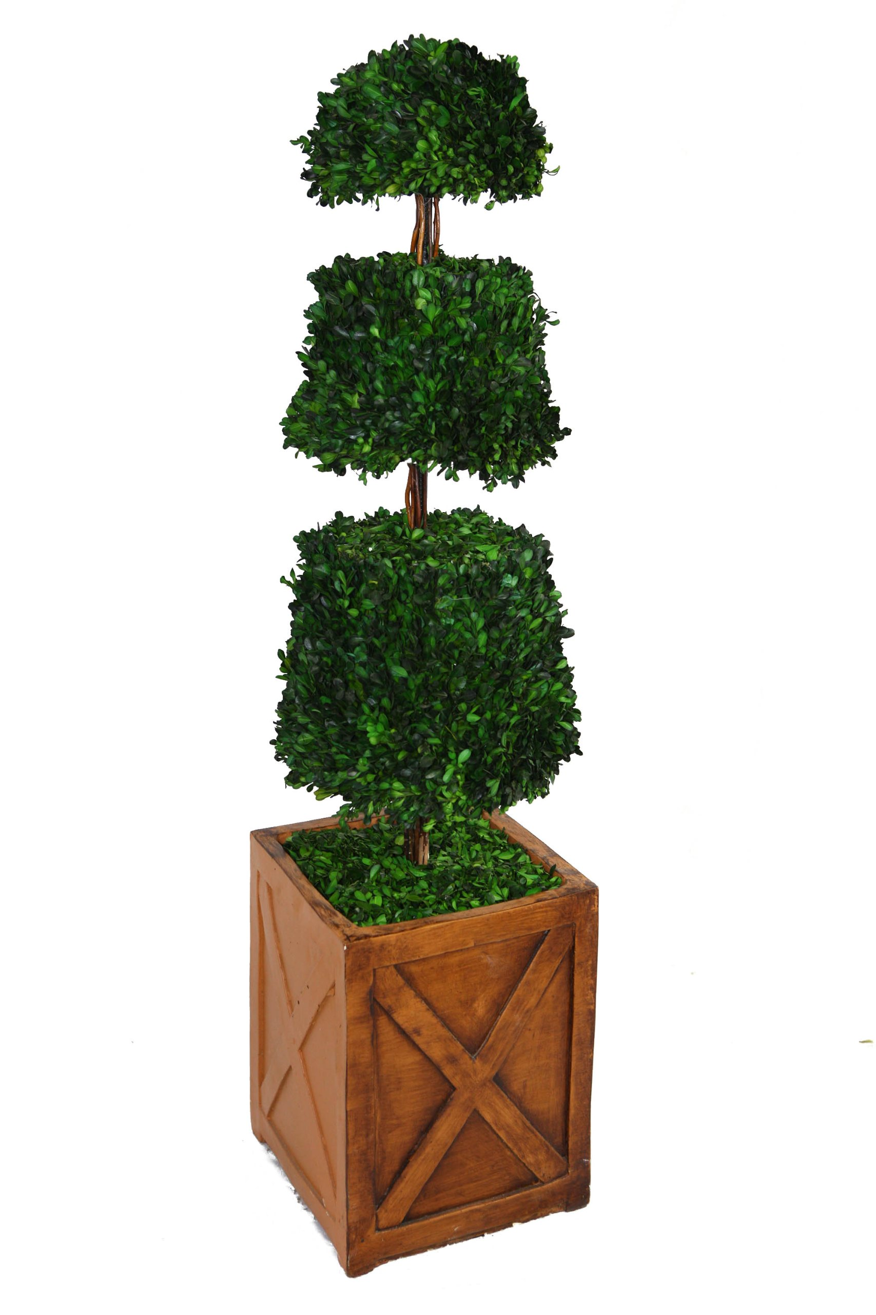 Laura Ashley 53 Inch Tall Preserved Natural Spiral Boxwood Cone Topiary in 13 Inch Fiberstone Planter