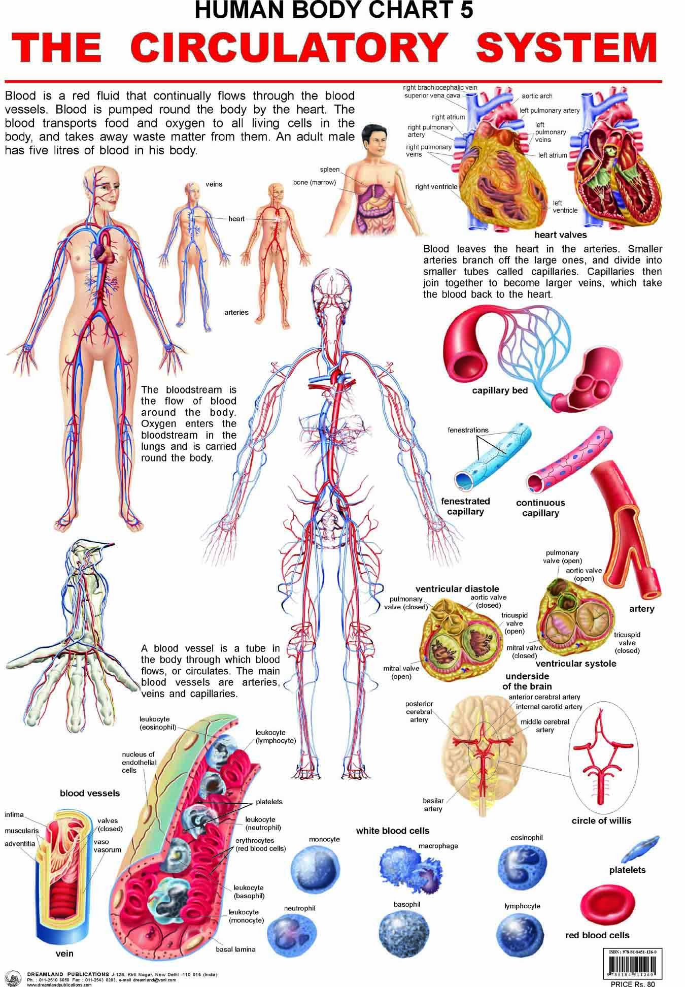 Buy The Circulatory System Book Online At Low Prices In India The