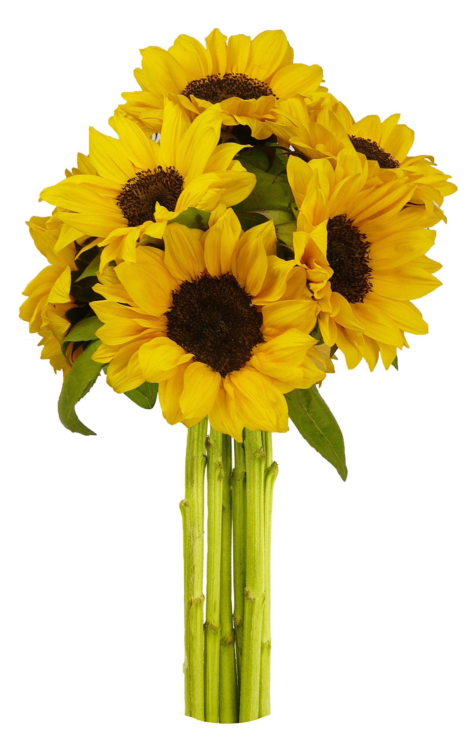 Amazon Kabloom Yellow Sunshine Bouquet Of 6 Fresh Cut Yellow