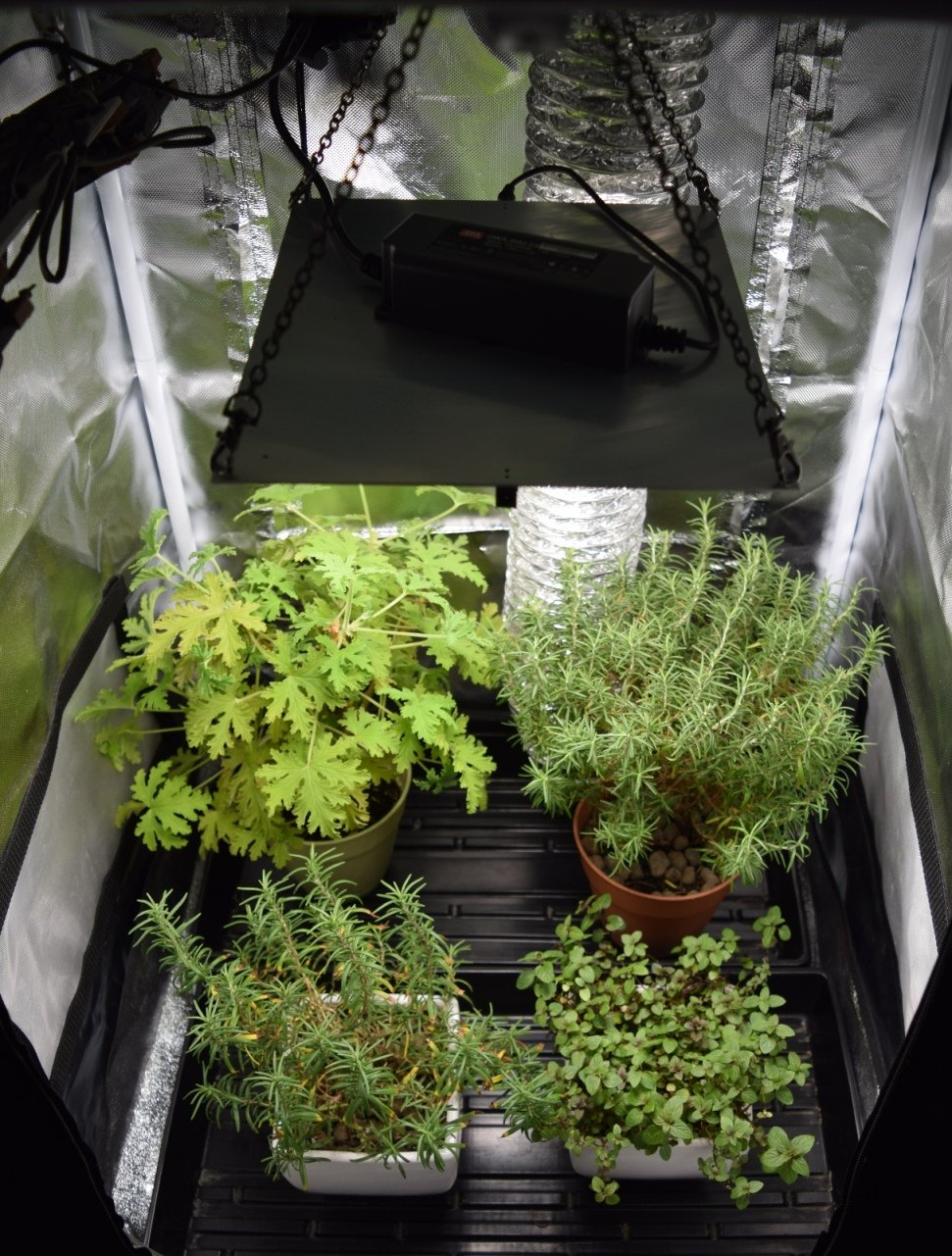 HLG 65 V2 4000K Horticulture Lighting Group Quantum Board LED Grow Light  Veg & Bloom 4000K | Version 2 High-Efficiency Upgraded LM301B LED's