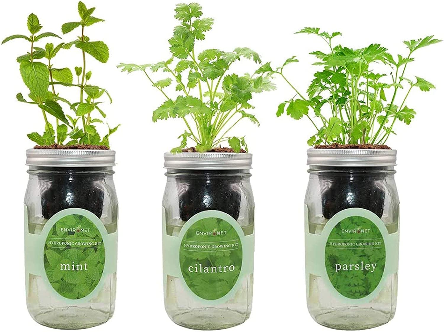 Environet Hydroponic Herb Growing Kit Set, Self-Watering Mason Jar Herb Garden Starter Kit Indoor, Grow Your Own Herbs from Seeds (Mint, Cilantro and Parsley)