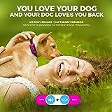 Small Dog Bark Collar Rechargeable - Anti Barking