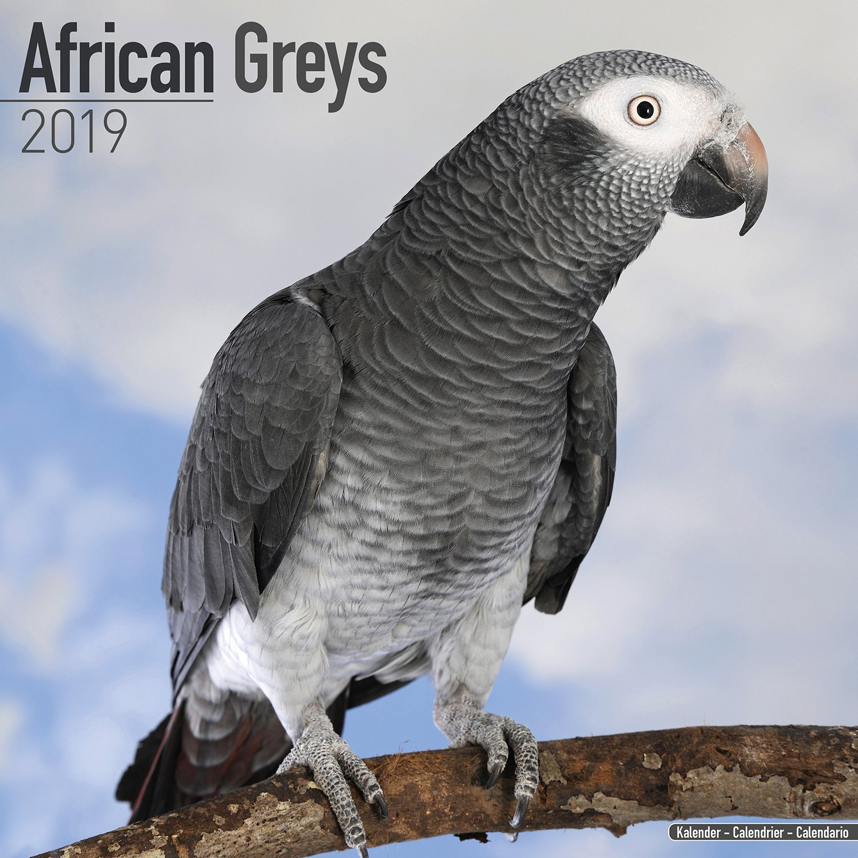 African Grey Calendar - African Grey Parrot Calendar - Parrot Calendar -  Calendars 2018 - 2019 Wall Calendars - Bird Calendars - Monthly Wall  Calendar by Avonside: MegaCalendars: 9781785803970: Amazon.com: Books