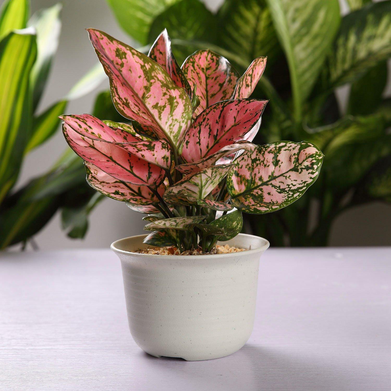 Amazoncom T4U 5 Inch Plastic Round Succulent Plant Potcactus Plant