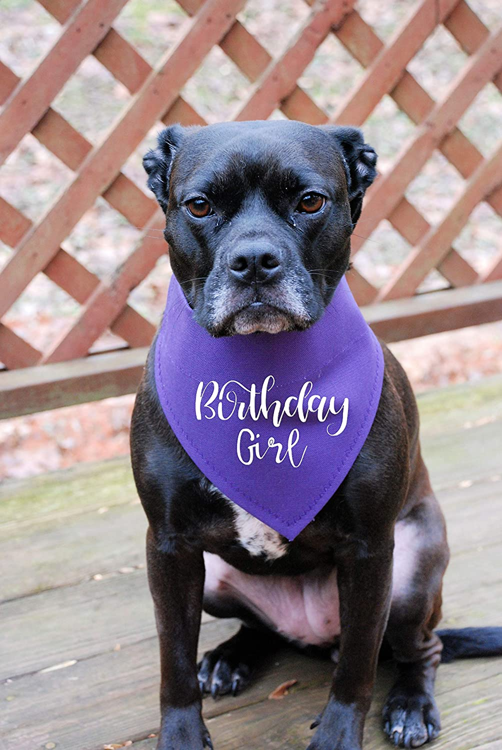 Birthday Girl Dog Bandana Beige with Lavender Flowers