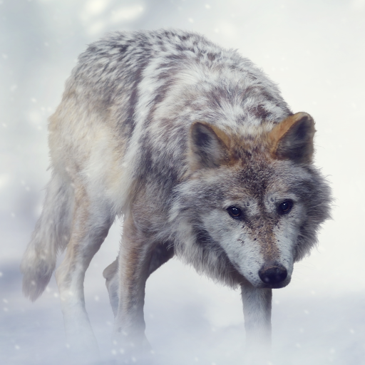 - Wolf Sounds