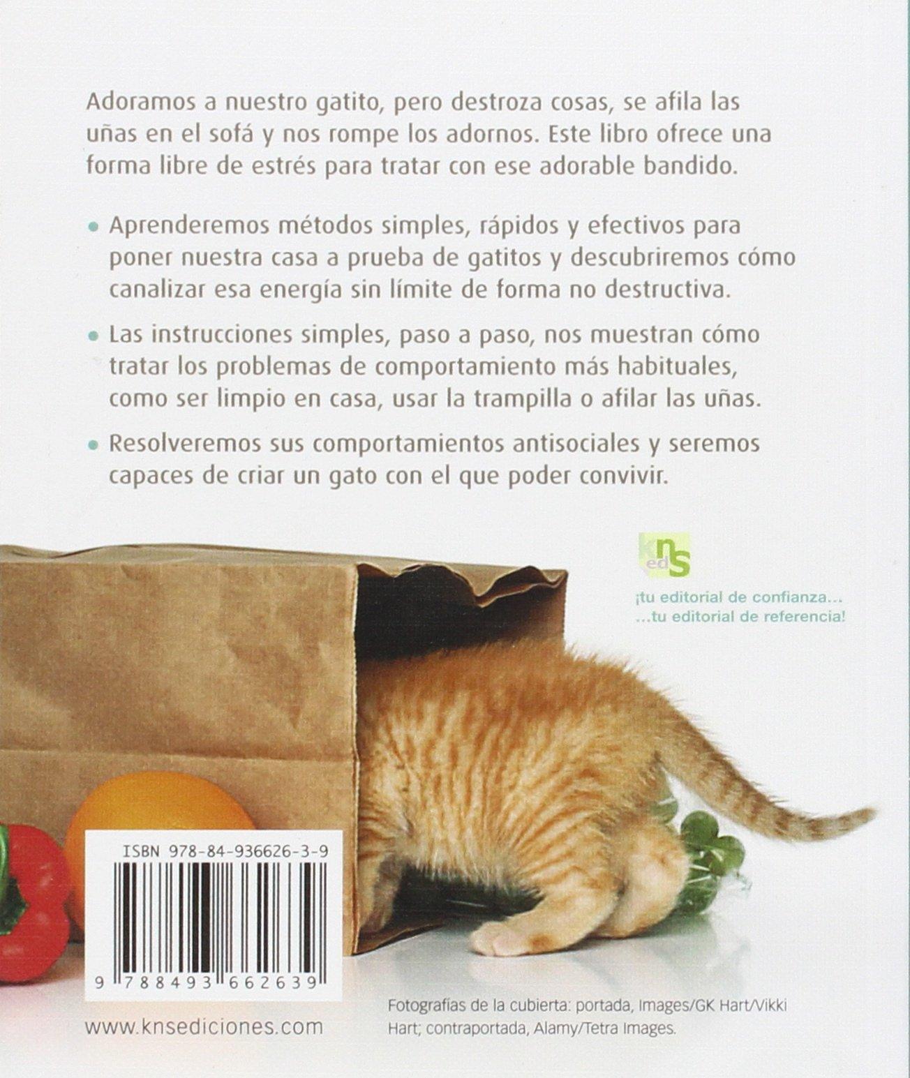 Lindo gatito: La vía más segura para socializar a tu gato Guías a Color: Amazon.es: David Taylor, María Reimóndez Meilán: Libros