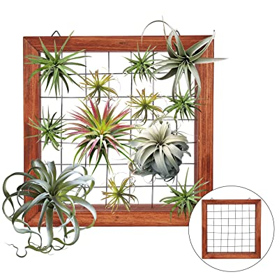 Air Plants Frame Bromeliads Wall Holder DIY Airplant Hanger Tillandsia Wall Display Succulent Stand Flower Shelf Planter Basket with Hanging Hooks Balcony Patio Garden Home Décor (PLANTS NOT INCLUDED): Kitchen & Dining