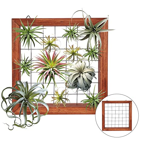 Review Air Plants Frame Bromeliads