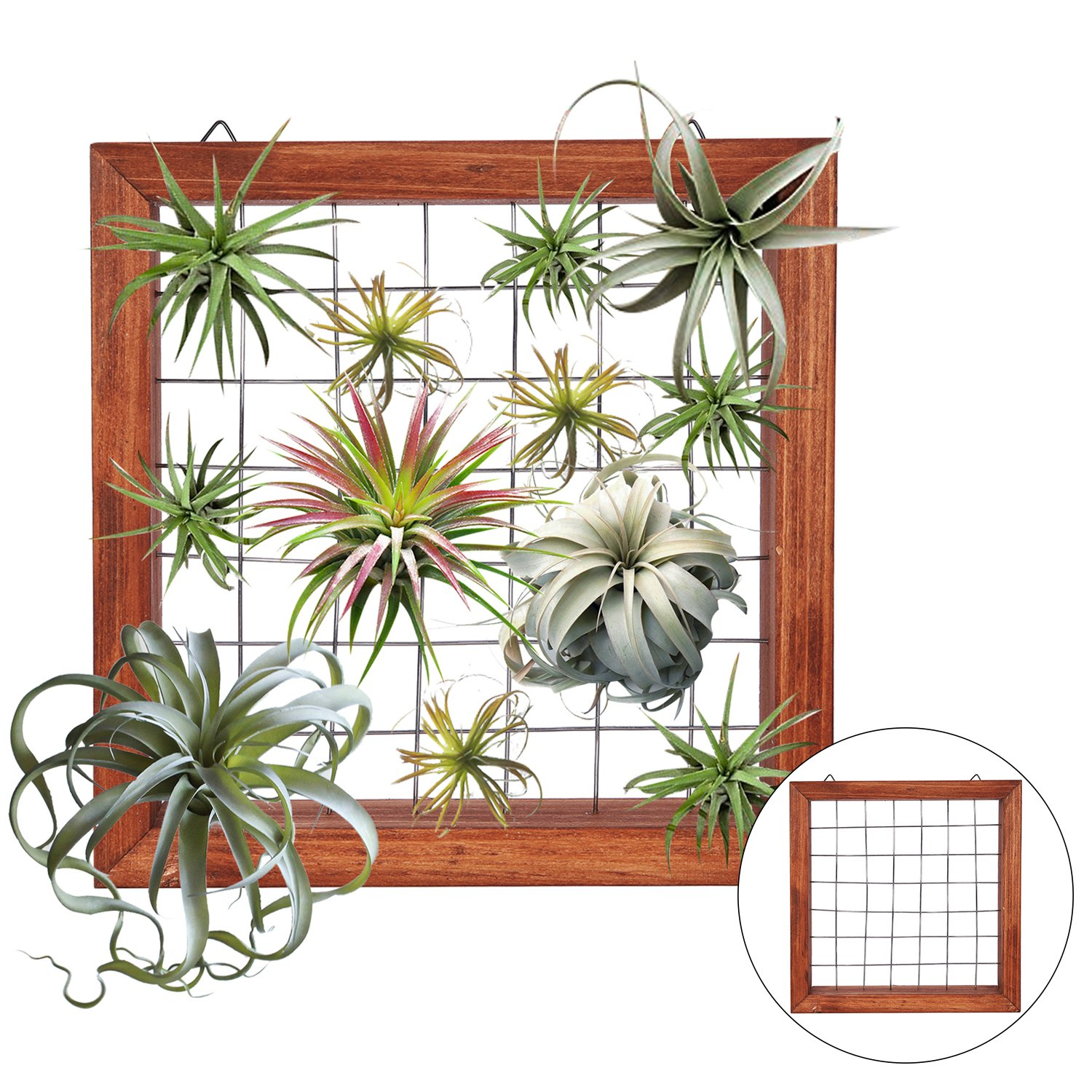 Air Plants Frame Bromeliads Wall Holder DIY Airplant Hanger Tillandsia Wall Display Succulent Stand Flower Shelf Planter Basket with Hanging Hooks Balcony Patio Garden Home Décor (PLANTS NOT INCLUDED)