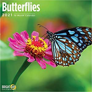 2021 Butterflies Wall Calendar by Bright Day, 12 x 12 Inch, Insect Flowers Garden