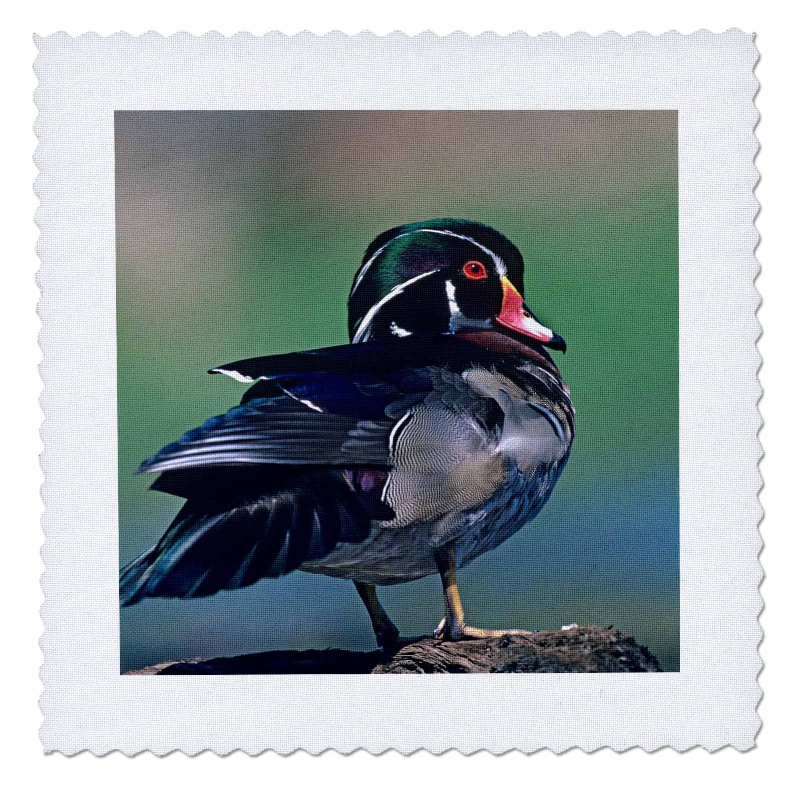 3dRose Danita Delimont - Ducks - Male wood duck, Aix sponsa, perched on a rock, Canada - 20x20 inch quilt square (qs_258122_8)