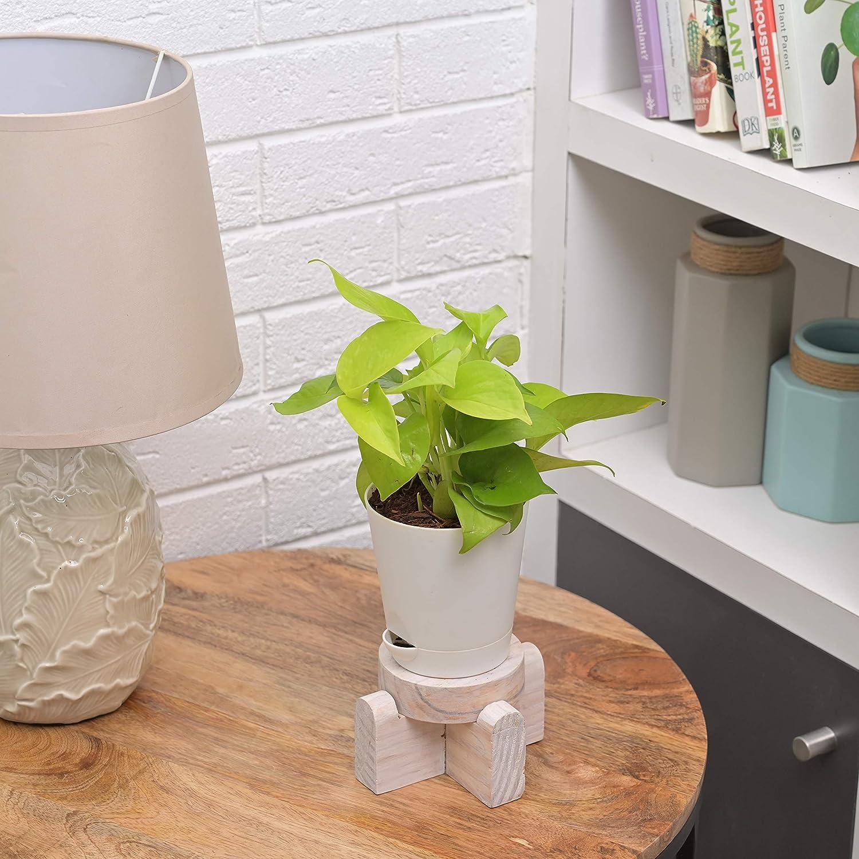 indoor plants money