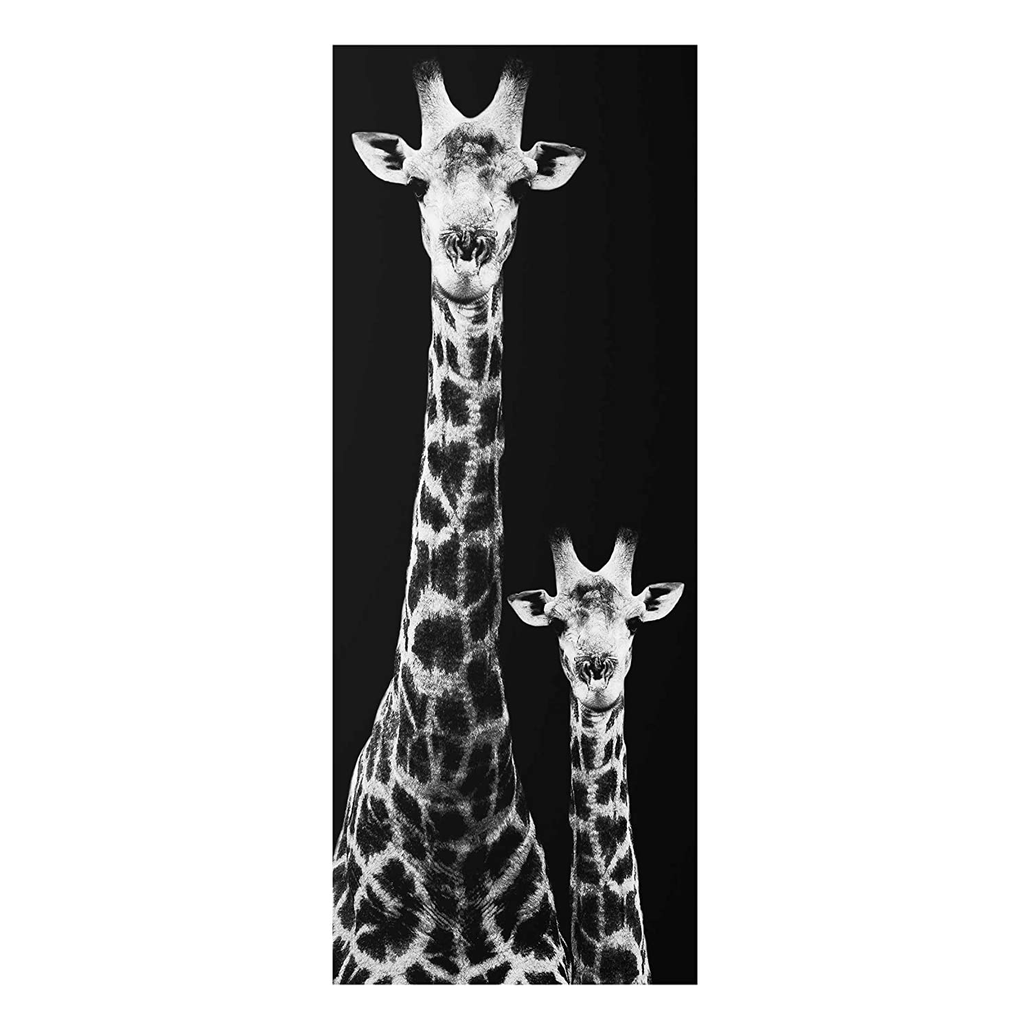 Print on Glass - Giraffe Duo black-white - Panel | print on glass glass print glass picture wall mural glass image wall art glass wall picture glass printing wall picture, Dimension HxW: 80cm x 30cm PPS. Imaging GmbH
