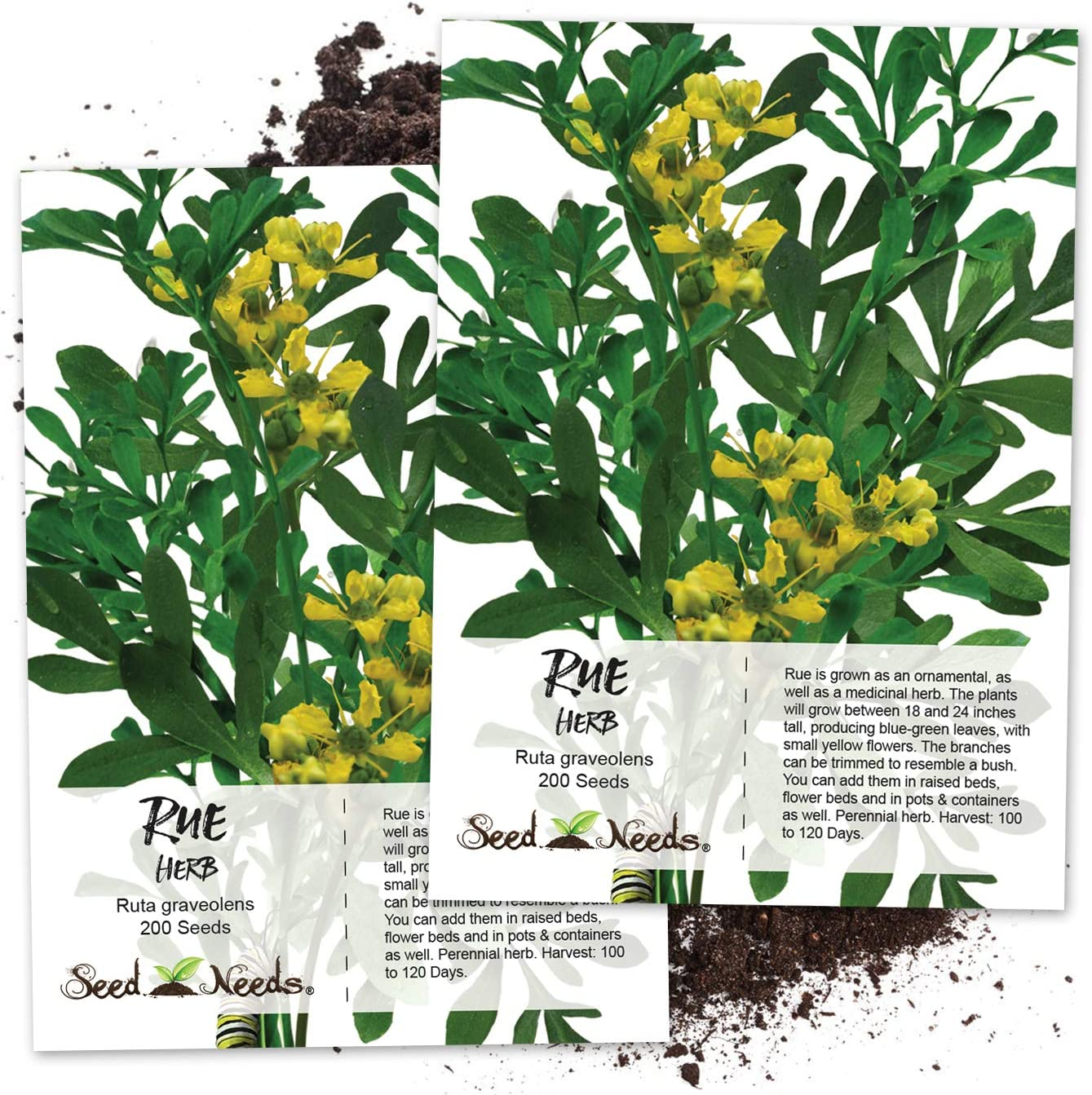 Amazon Com Seed Needs Rue Herb Ruta Graveolens Twin Pack Of