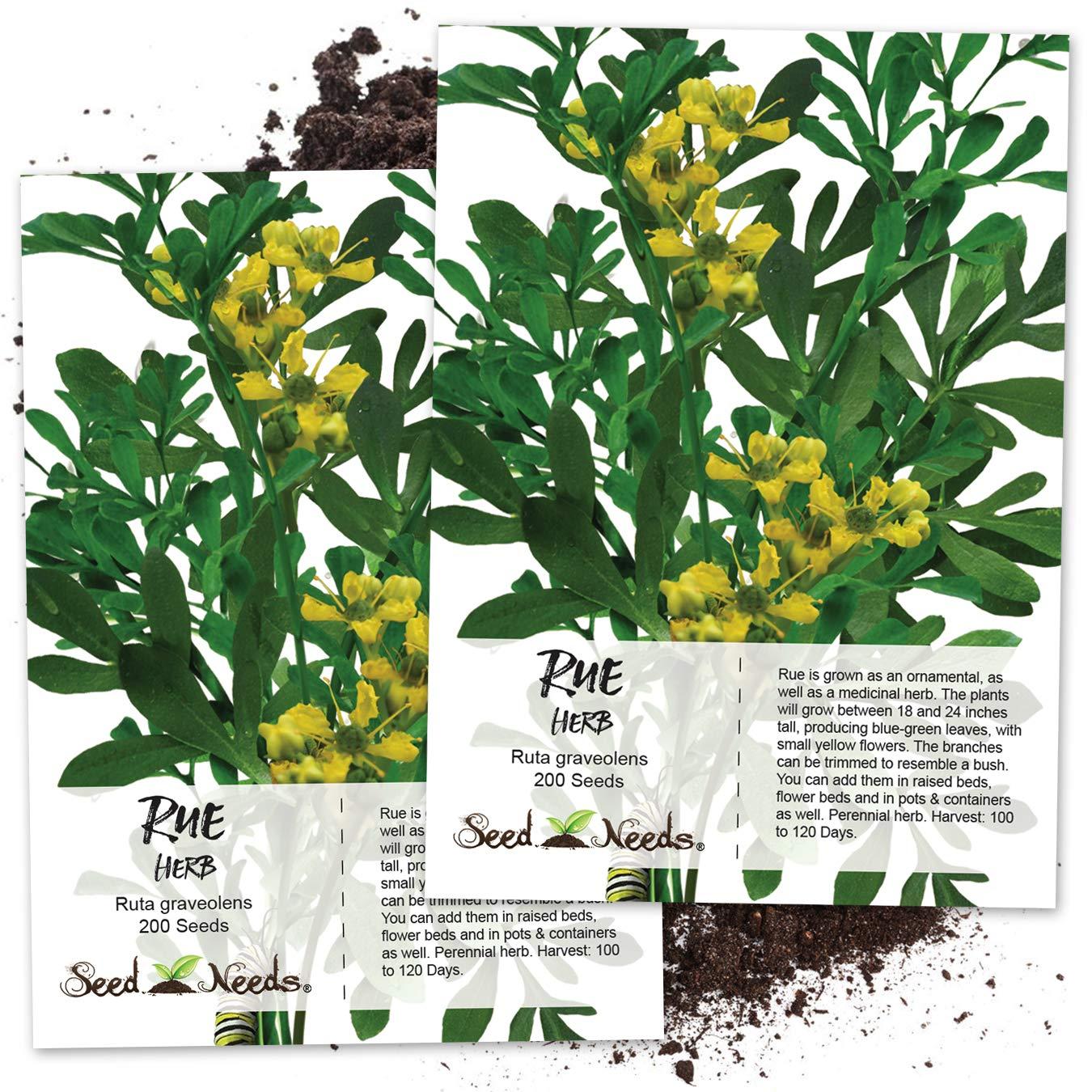 Amazon Seed Needs Rue Herb Ruta Graveolens Twin Pack Of 200