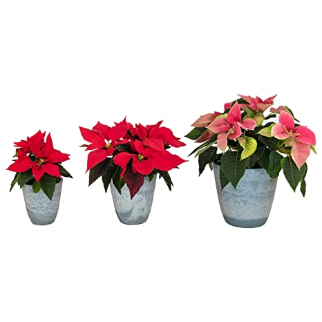 Set of 3 Eco Friendly Indoor Outdoor Garden PlantersFlower Pots-Made from Recycled  sc 1 st  Amazon.com & Amazon.com : Set of 3 Eco Friendly Indoor Outdoor Garden Planters ...
