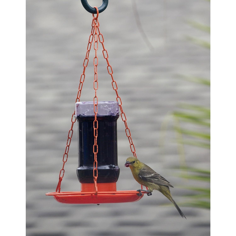 news a make feeder baltimore orange orioles oriole an for best audubon