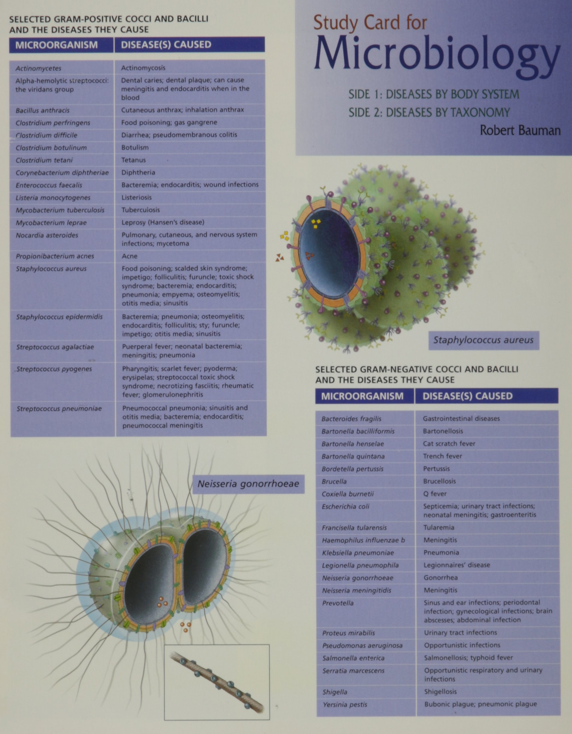 Buy Study Card for Bauman Microbiology Book Online at Low