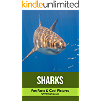 Sharks: Fun Facts & Cool Pictures