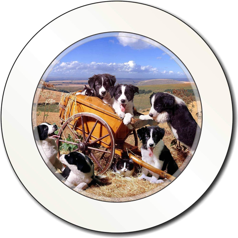 Advanta Group Border Collie in Wheelbarrow Car/Van Permit Holder/Tax Disc Gift Advanta Products
