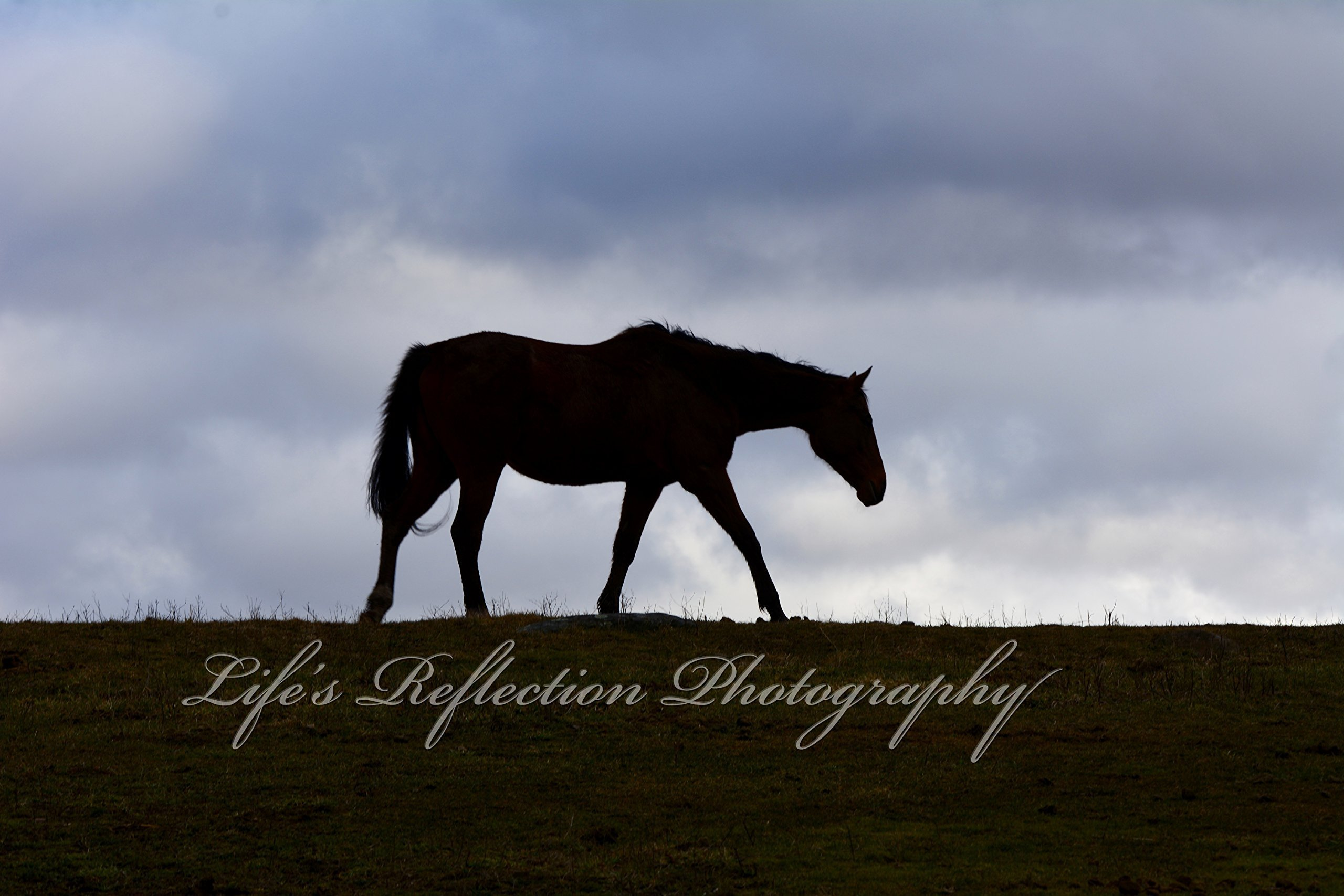 Wildlife Photography, Landscape Photography, Silhouette Photography, Wall Decor, Fine Art, Horse Photography, Horse Photography, Sizes from 5x7 to 20x30