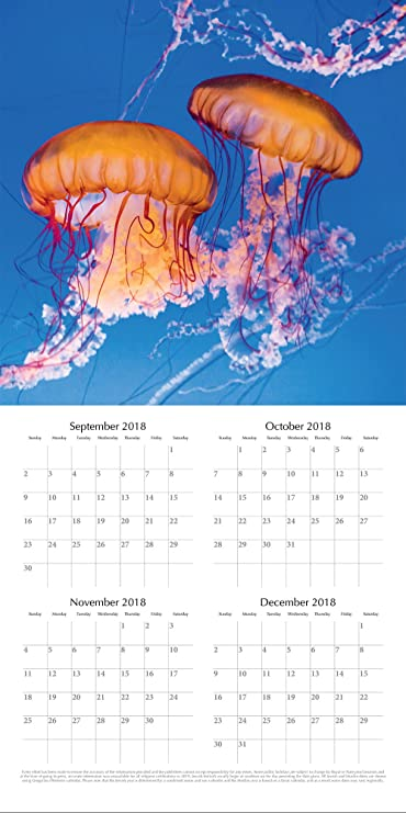 2019 Bajo El Mar - 30 X 30 Cm Calendario De Pared En Inglés: Amazon.es: Oficina y papelería