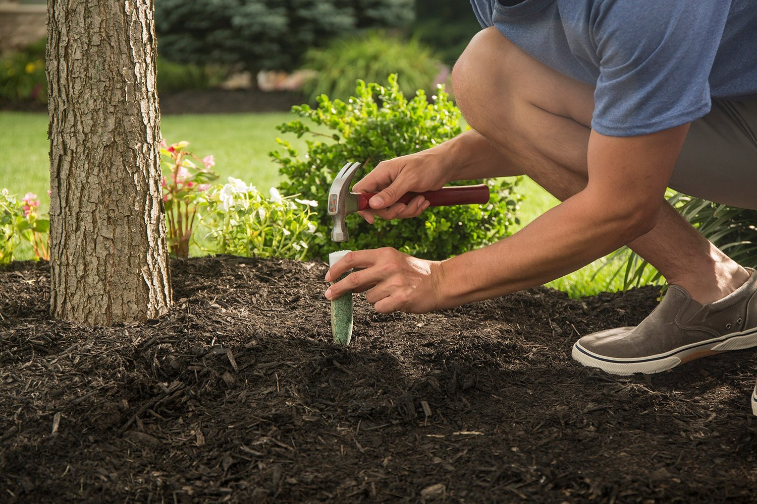 Amazon.com : Miracle-Gro Fertilizer Spikes for Evergreens, 12-Pack ...