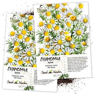 Seed Needs, Roman Chamomile (Anthemus nobilis) Twin Pack of 500 Seeds Each Non-GMO : Herb Plants : Garden & Outdoor