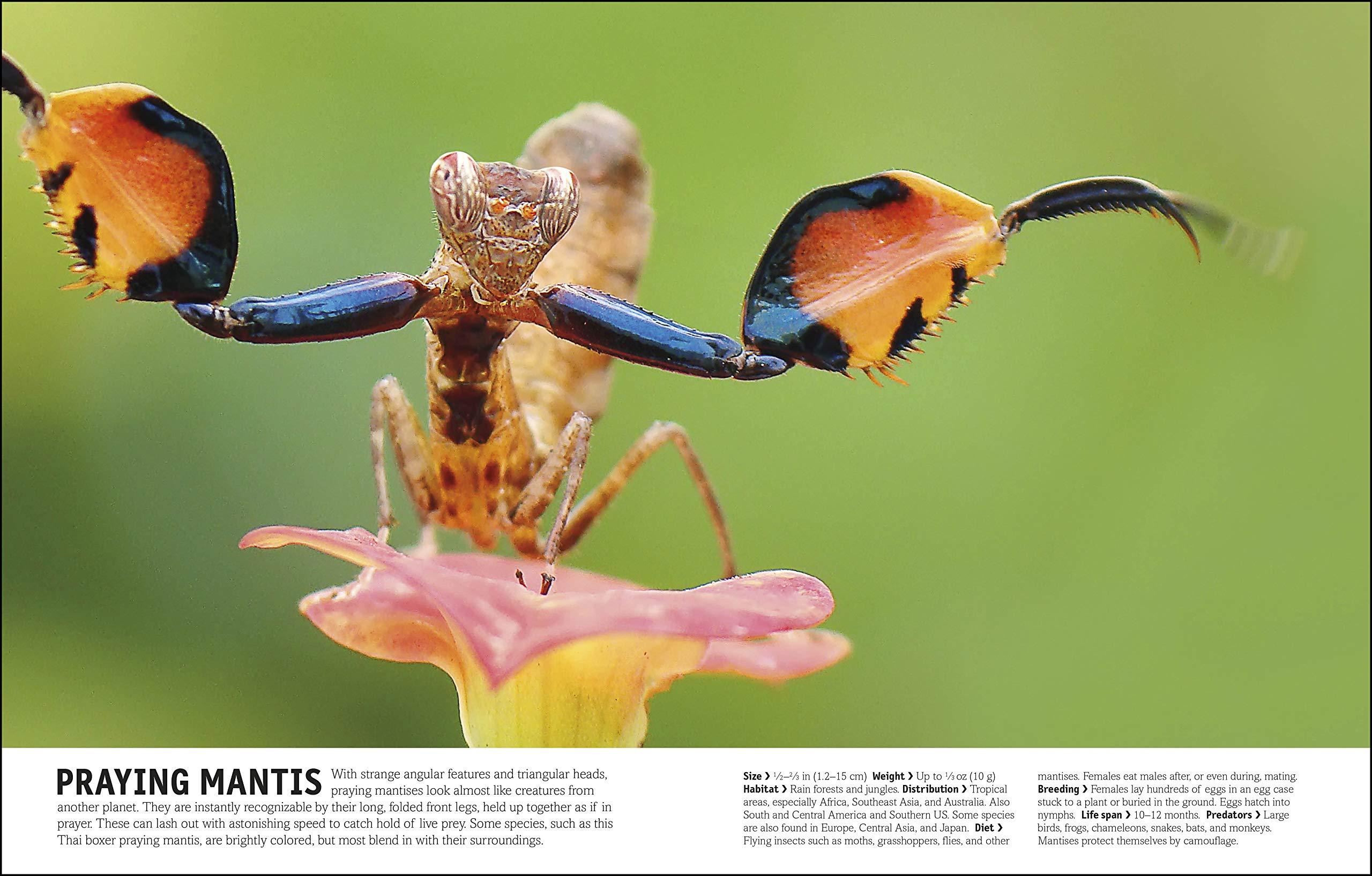 The Animal Book: A Visual Encyclopedia of Life on Earth: David