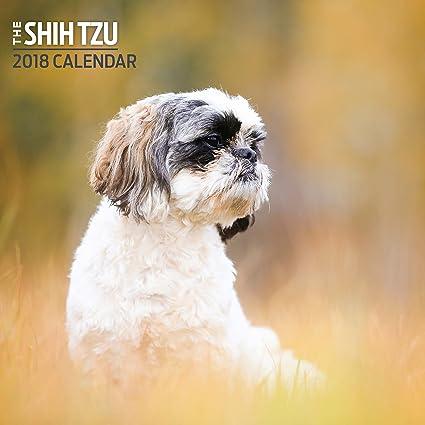 Zeer Amazon.com : Shih Tzu 2018 Mini Calendar : Office Products &OX55