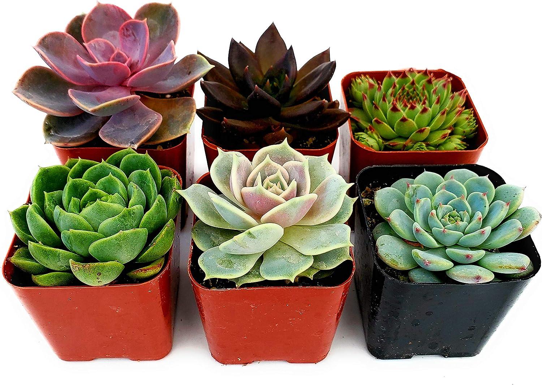 10 Fat Plants San Diego 2 Inch Plastic Planters//Pots Black
