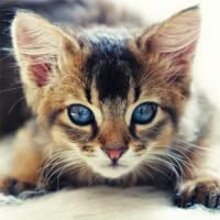 Guess The Kitten Breed - Trivia Game (Ad-Free)