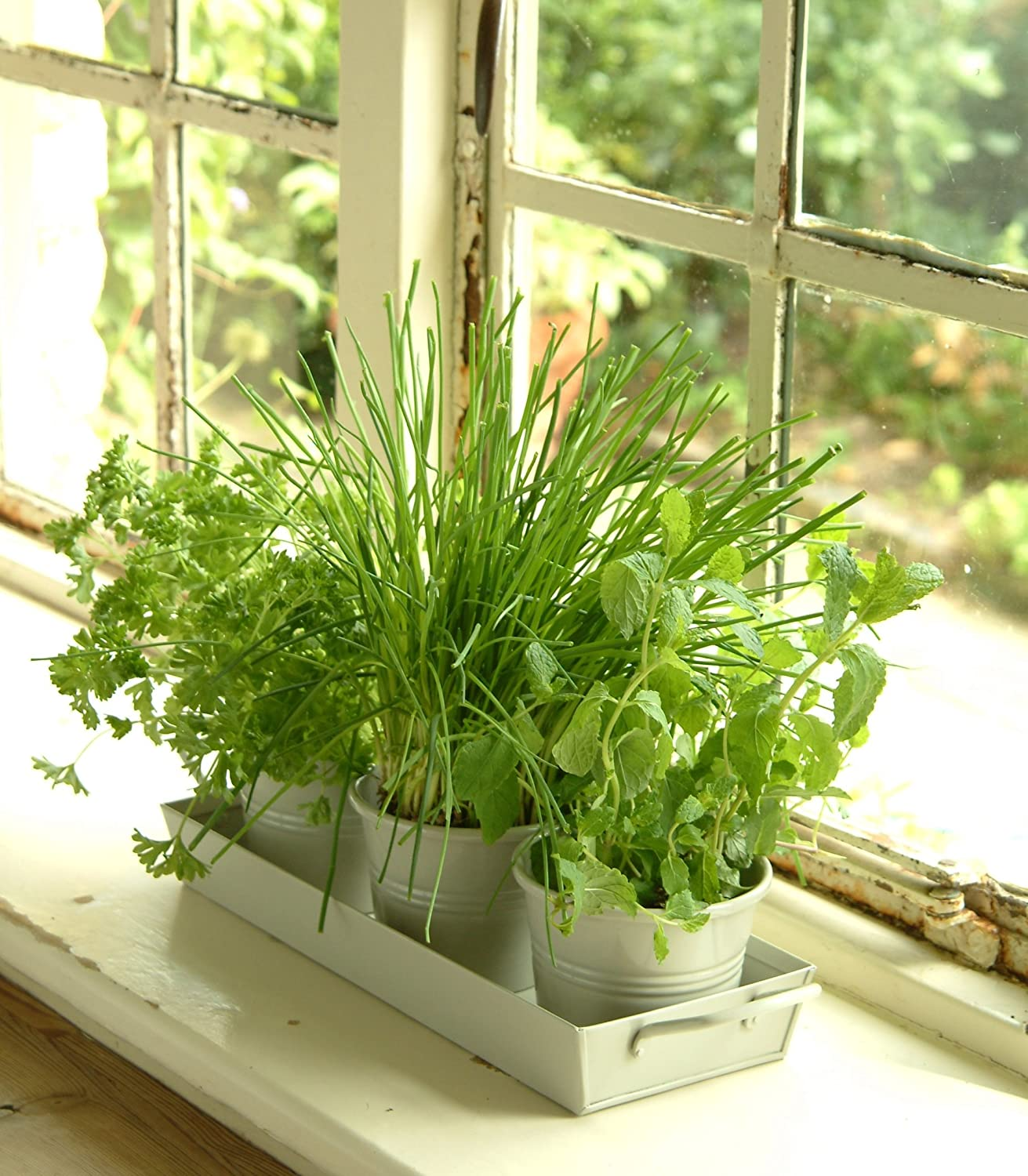 Kitchen Herb Garden Indoor: Kitchen Herb Pots Wooden Planter Window Sill Garden Plant
